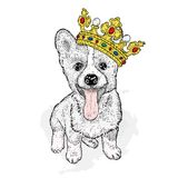 A sweet dog in a beautiful golden crown. Purebred puppy. Vector illustration for a postcard or a poster, print on clothes. Fashion and style, accessories Stock Image