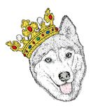A sweet dog in a beautiful golden crown. Purebred puppy. Vector illustration for a postcard or a poster, print on clothes. Fashion and style, accessories Stock Photo