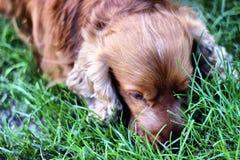 Sweet dog Stock Image