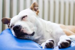 Sweet dog Dreams Stock Images