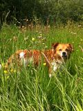 Sweet dog in the grass Stock Image