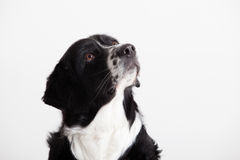 Sweet dog portrait. Happy dog photographed in the studio on a white background royalty free stock photos