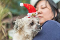 Sweet dog with santa claus hat look something royalty free stock image