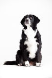 Sweet dog is waiting. Happy dog photographed in the studio on a white background stock image