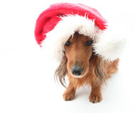 Sweet dog wearing Santa hat for Christmas. A cute little dog wearing a Santa hat for the Christmas holidays stock image