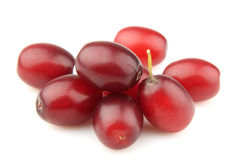 Sweet dogberry Royalty Free Stock Photography