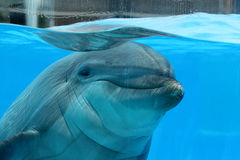 Sweet Dolphin Stock Images