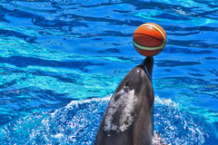 Sweet Dolphin Royalty Free Stock Photography