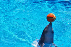 Sweet Dolphin Royalty Free Stock Image