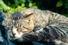 A sweet dream of lazy brown striped cat laying down on the car windshield Royalty Free Stock Images
