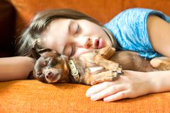 Sweet dream. Toy-terrier dog sleeping with her girl owner. Sweet dream. Little brown Toy-terrier dog sleeping with her lovely girl owner on a coach. Multicolored stock image