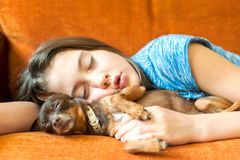 Sweet dream. Young girl sleeping hugging her lovely dog. Sweet dream. Young girl sleeping hugging her lovely little brown Toy-terrier dog on a coach Royalty Free Stock Image