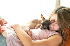 Sweet dreaming. Young girl in pyjamas sleeping holding her lovel. Y little brown Toy-terrier dog in rays of sunlight. Multicolored vibrant horizontal indoors Royalty Free Stock Image