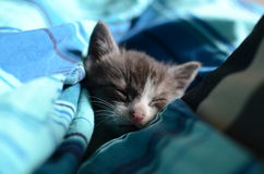 Sweet dreams. Cute kitten sleeps in bed in the afternoon Royalty Free Stock Photos
