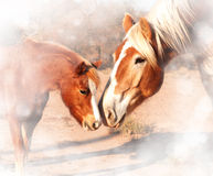 Sweet, dreamy image of a small pony and a huge draft horse. Sniffing noses; friendship without limits Stock Photos