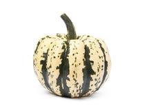Free Sweet Dumpling Pumpkin Royalty Free Stock Images - 101858839