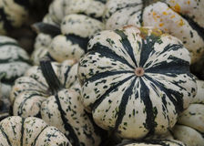 Sweet dumpling squash Stock Images