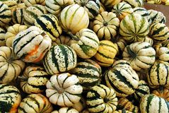 Sweet Dumpling squash Royalty Free Stock Photography
