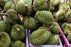 Sweet durian in thailand Royalty Free Stock Image