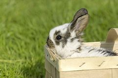 Sweet easter Bunny in the box Royalty Free Stock Photography