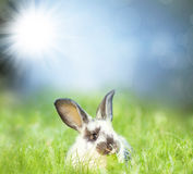 Sweet Easter bunny in the spring meadow Stock Photo