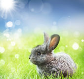 Sweet Easter bunny in the spring meadow Stock Photos