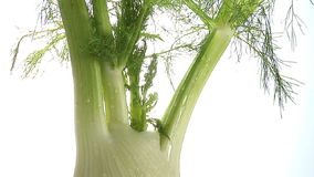 Sweet Fennel stock footage