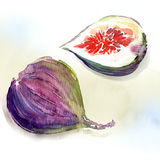 Sweet fig. Watercolor painting on white background Stock Photo