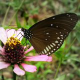 Sweet flower and butterfly. Sweet moment in nature Stock Photos