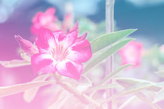 Sweet flowers blur made with color filters. Sweet flowers blur made color filters Stock Image