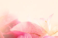 Sweet flowers in color vintage style on mulberry paper texture Stock Photo