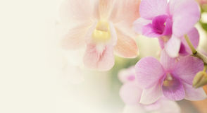 Sweet flowers in soft and blur style on mulberry paper texture Royalty Free Stock Photos