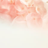 Sweet flowers in soft and blur style on mulberry paper texture Stock Photo