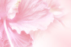 Sweet flowers soft style for background Royalty Free Stock Image