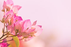 Sweet flowers in soft style Stock Images