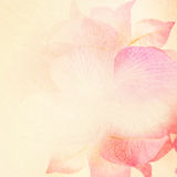 Sweet flowers in vintage color style on mulberry paper texture Stock Photo