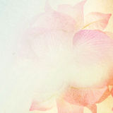 Sweet flowers in vintage color style on mulberry paper texture Royalty Free Stock Photo