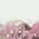 Sweet flowers in vintage color style on mulberry paper texture Stock Images