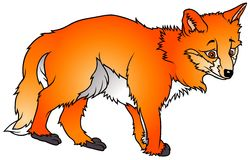 Sweet Fox Royalty Free Stock Images
