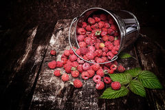Sweet fragrant raspberries poured out of the bucket Royalty Free Stock Image
