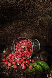Sweet fragrant raspberries poured out of the bucket Royalty Free Stock Photography