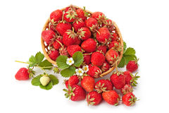 Sweet, fragrant strawberries in a wicker basket Stock Images