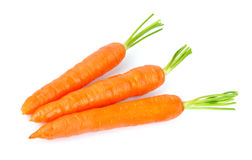 Sweet and freash carrots Stock Images