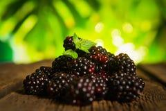 Sweet fresh  blackberry Stock Photos