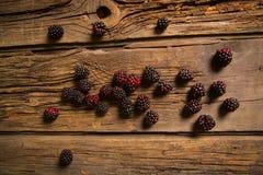Sweet fresh  blackberry Stock Photography