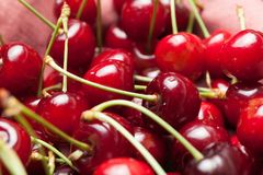 Sweet fresh cherry food, meal berry.  royalty free stock photo