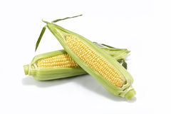 Sweet fresh corn Stock Images