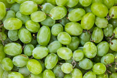 Sweet fresh grape Royalty Free Stock Photography