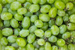Sweet fresh grape Stock Image