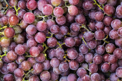 Sweet fresh grape Stock Photography